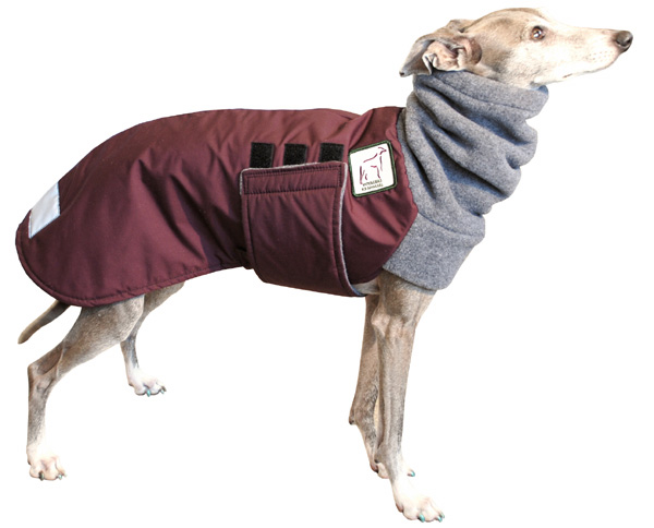 Italian Greyhound Clothes