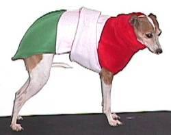 italian greyhound italian clothes